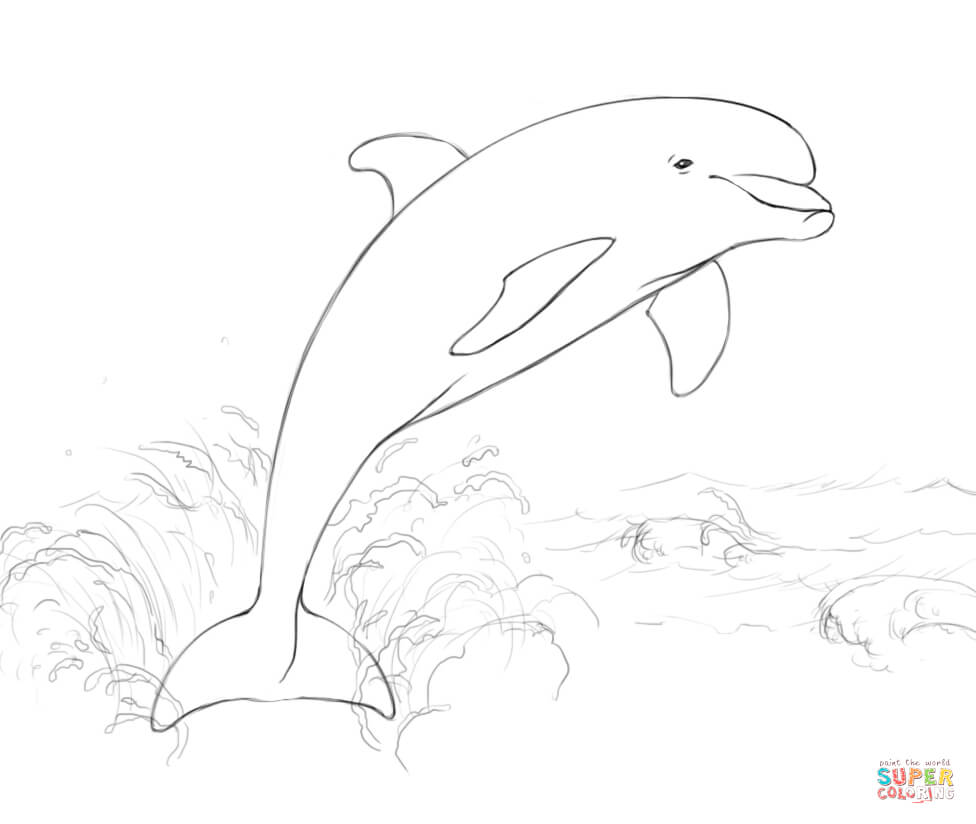 Bottlenose Dolphin clipart nosed Dolphin Dolphin Jumping page coloring