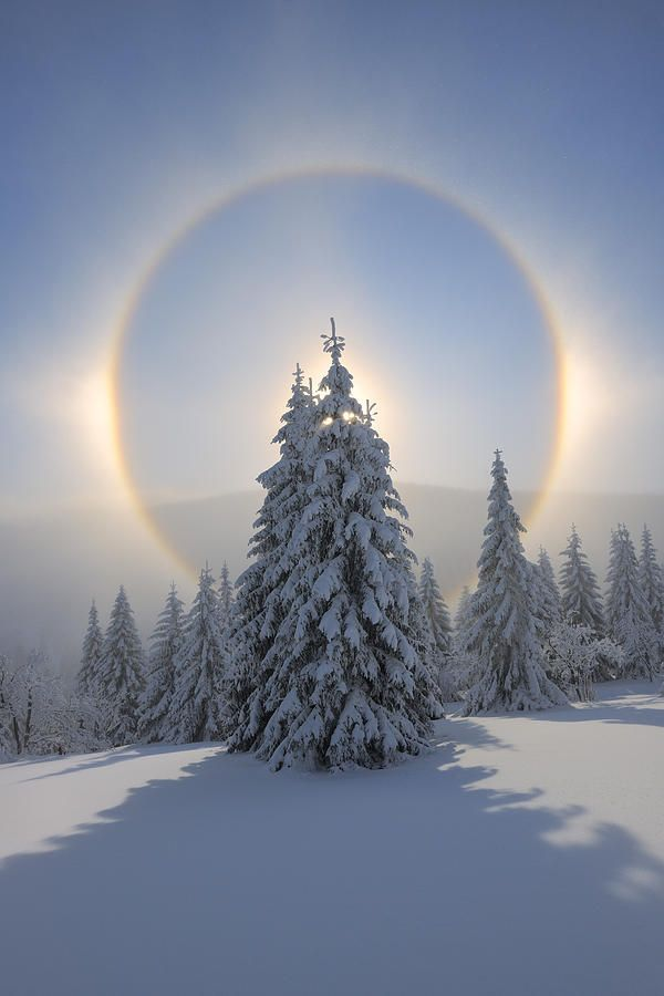 Drawn pine tree winter tree Best Halo Mountains images Ore