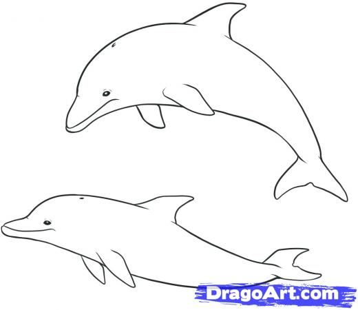 Drawn dolphins Dolphins Drawing How Step to