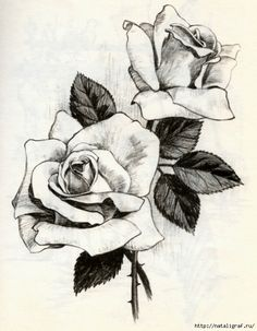 Drawn red rose hand drawn How draw to Beautiful more