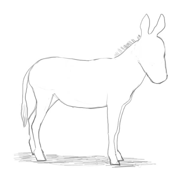 Drawn donkey Drawing few donkey the practically