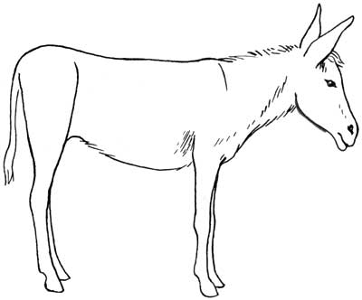 Drawn donkey Donkey5 donkeys draw jpg