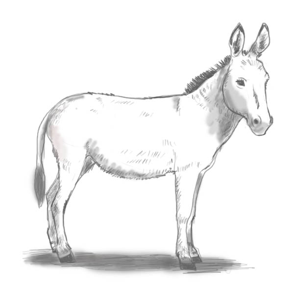 Drawn donkey The donkey draw to Complete