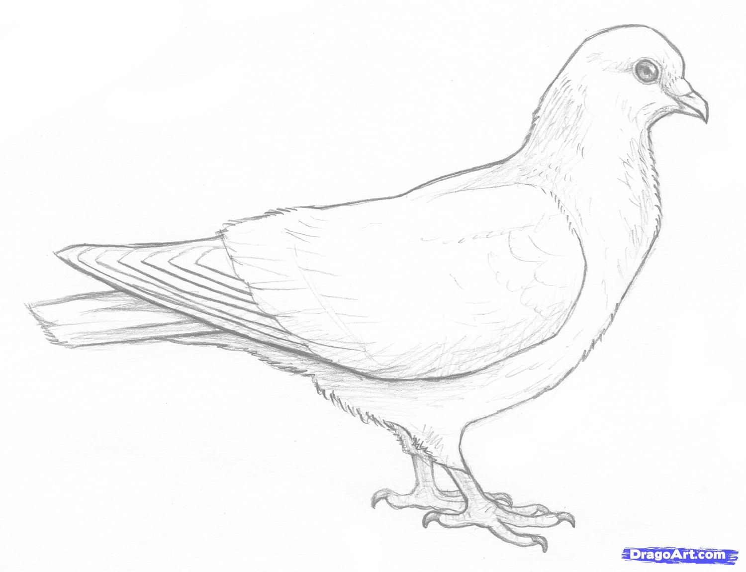 Drawn dove Step  how Online draw
