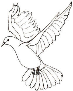 Drawn dove A How Draw step a