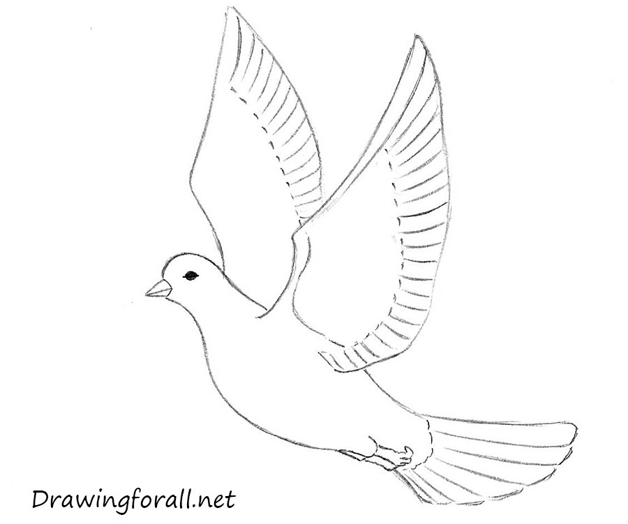 Drawn dove A how draw for a