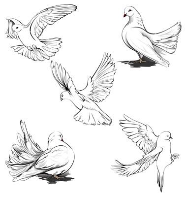Drawn dove Pencil how  draw dove