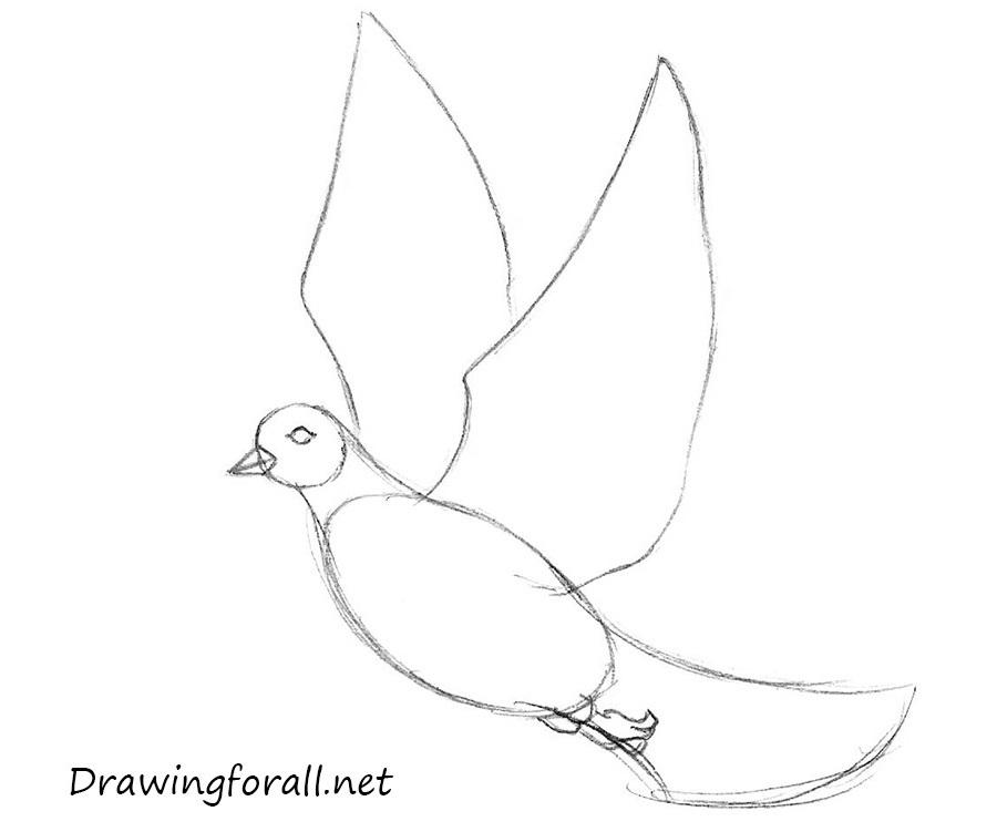 Drawn dove Draw how net draw step