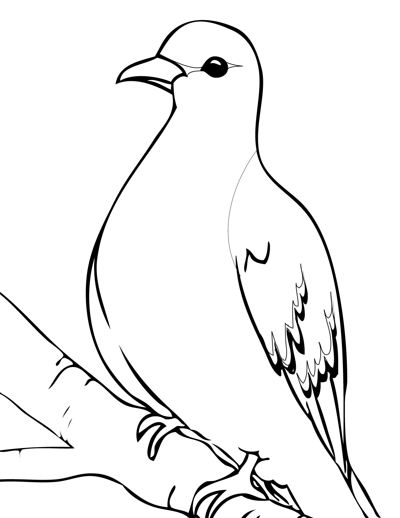 Mourning Dove clipart line drawing Pinterest page page Printables Mourning