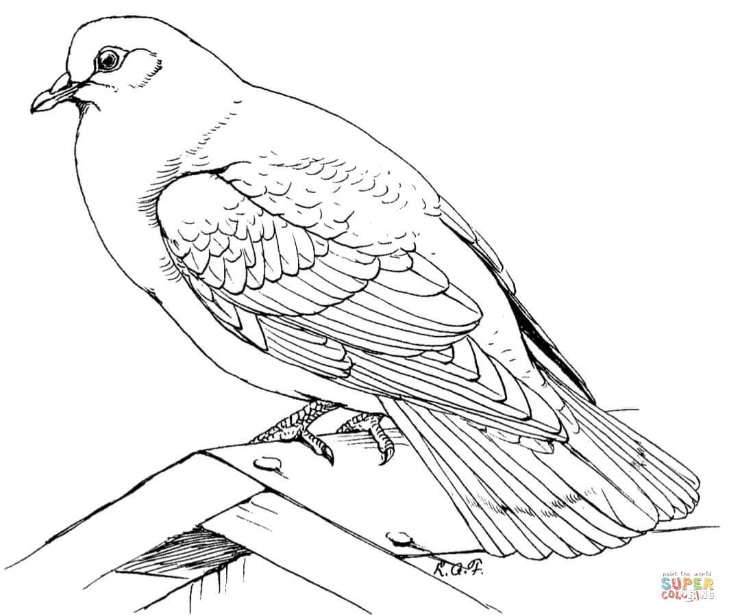 Mourning Dove clipart line drawing Coloring Pages Rock Coloring Doves