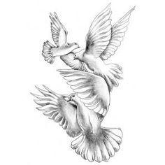 Drawn pigeon religious Pinterest drawing ideas dove Google