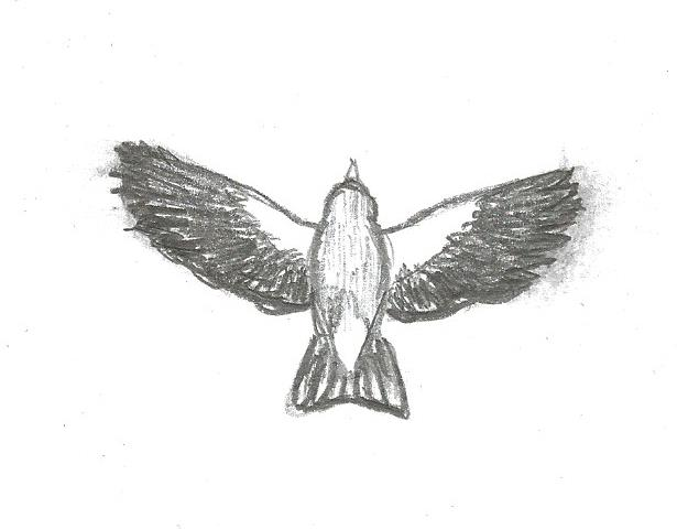 Drawn hawk flying How Goldfinch Identify flight Birds
