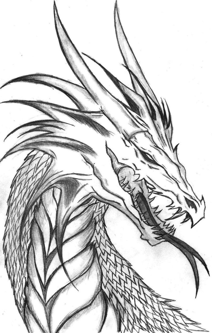 Drawn pen vector Dragon Dragon drawings on Coloring