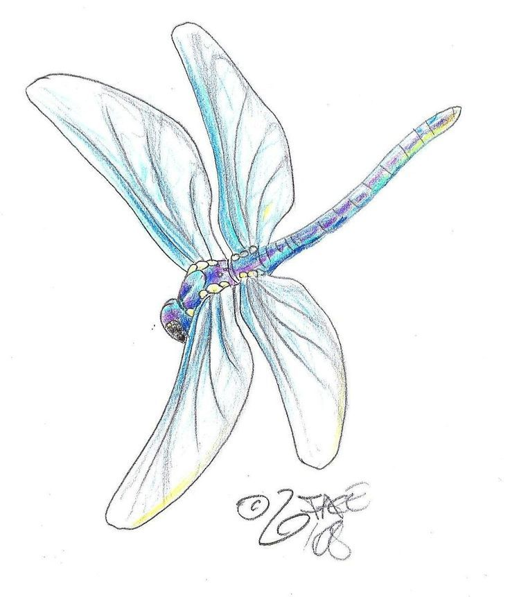 Drawn dragonfly Dragonfly illustrations dragonfly Drawings In