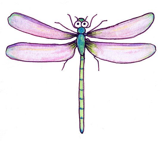 Drawn dragonfly Inn Drawings Drawing Trending »