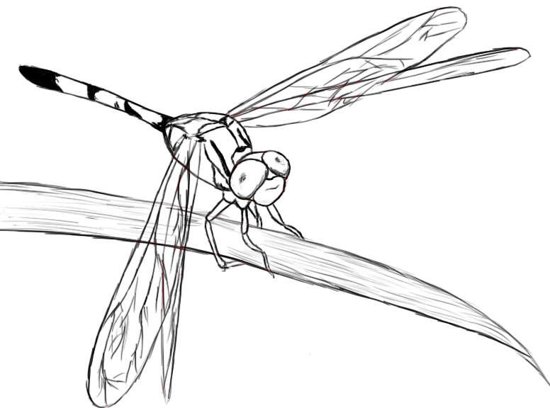 Drawn dragonfly To body At much of