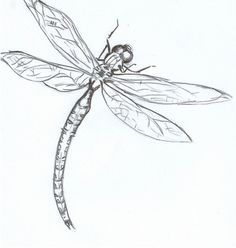 Drawn dragonfly In the Google flight dragonfly