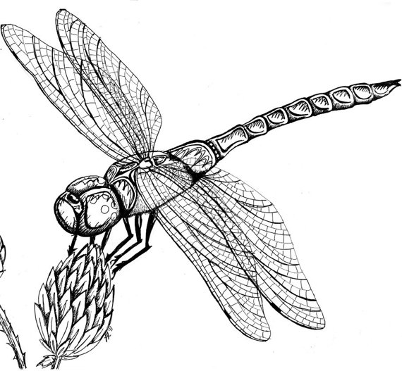 Drawn dragonfly Dragonfly Drawing Realistic Best Drawing