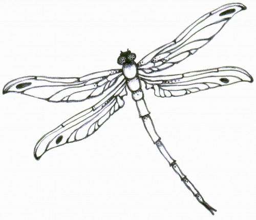 Realistic clipart dragonfly #7