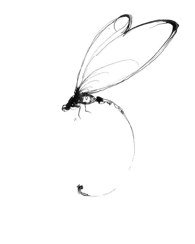 Drawn samurai dragonfly Dragonfly DrawingIndia drawing best Dragonfly