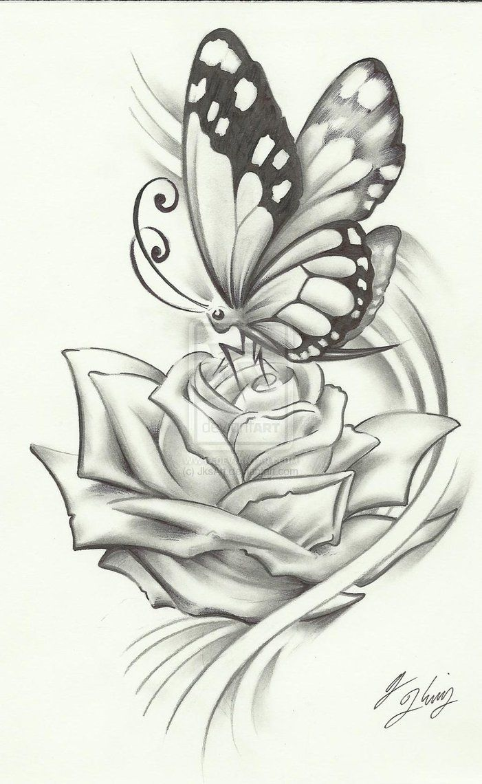 Drawn rose creative Butterfly were be would drawing