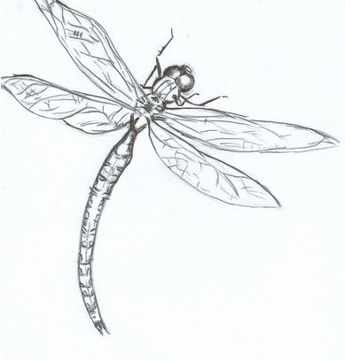 Drawn dragonfly Dragonfly The on by embryo
