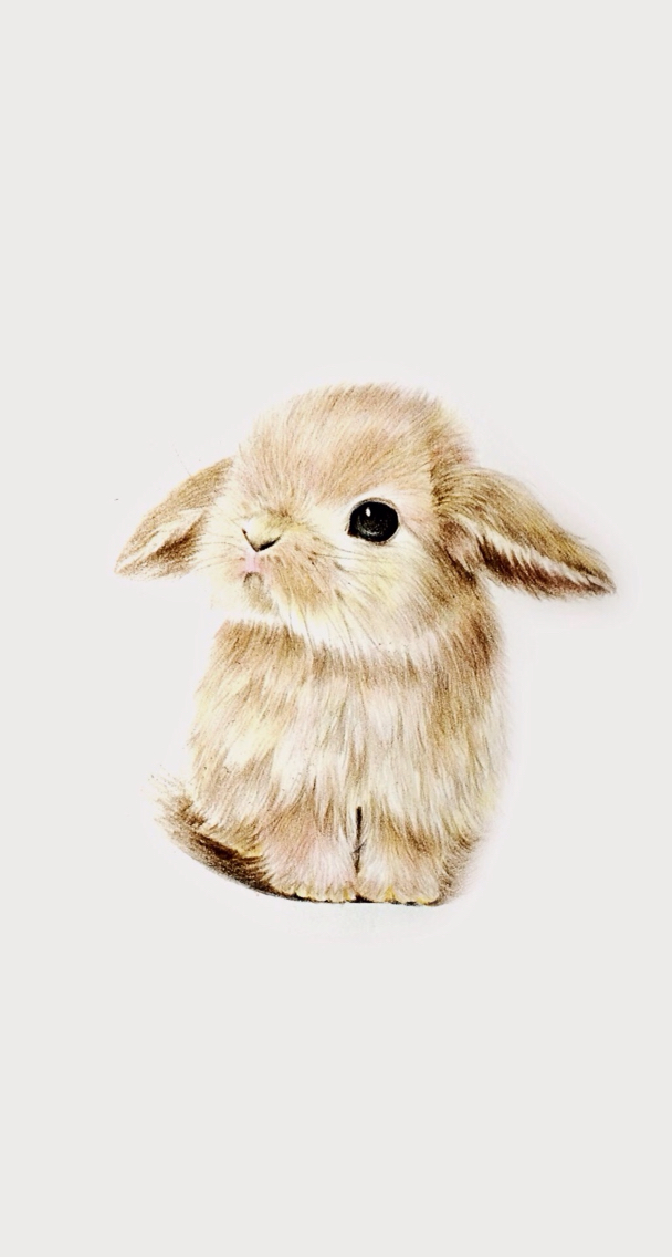 Drawn dwarf wallpaper Rabbit cute super cute bunny