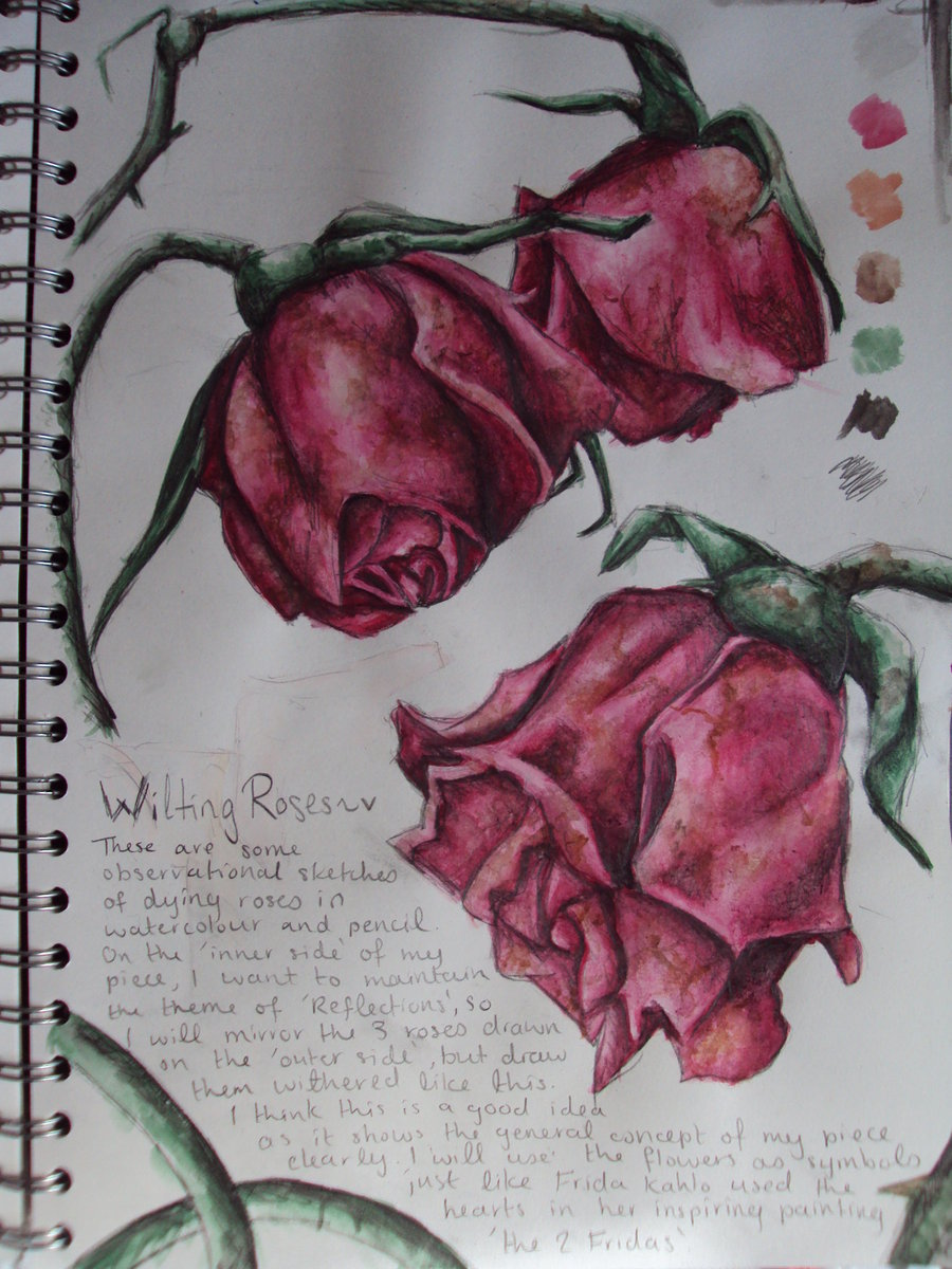 Drawn dying Rose Dying Roses Dying reviews
