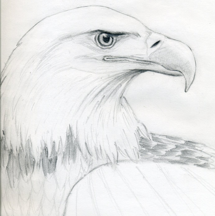 Drawn eagle Eagle to image click Draw