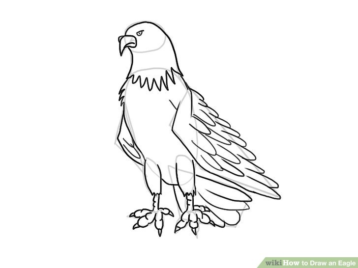 Drawn eagle Ways an Draw Draw Image