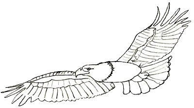 Drawn eagle Draw Drawing Step Pencil Eagle