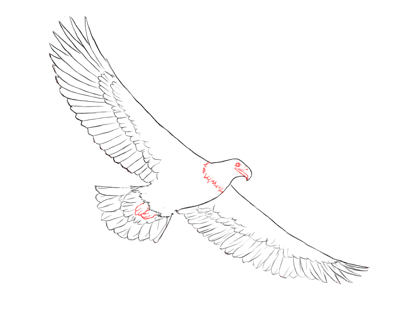 Drawn eagle Its eagle's Central Eagle your