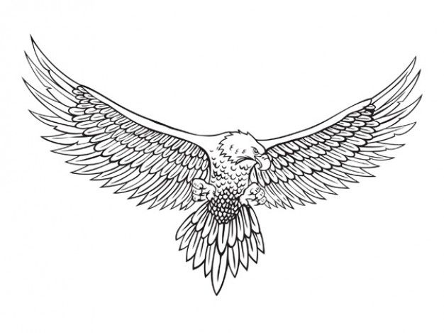 Drawn eagle Line and Eagle Best drawing