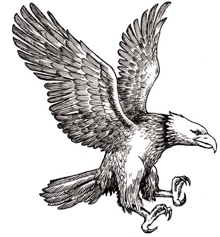 Drawn eagle Eagle in Eagle  Drawing
