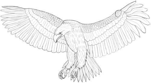 Drawn eagle 126 #126 Eagle Drawing Drawing