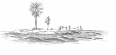 Drawn island deserted Island Nature Palm Drawings Jeff