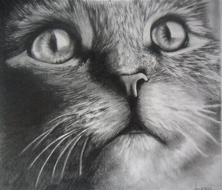 Drawn eiland realistic About images best Pencil 20