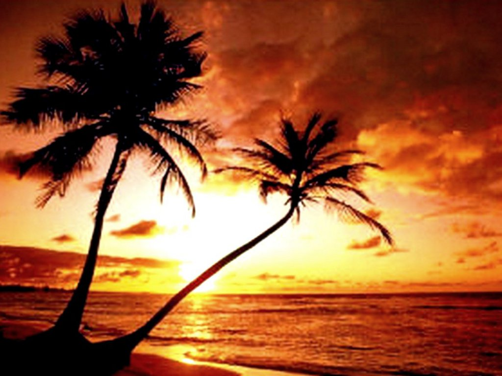 Drawn eiland sunset Island Paradise Tropical  Sunset
