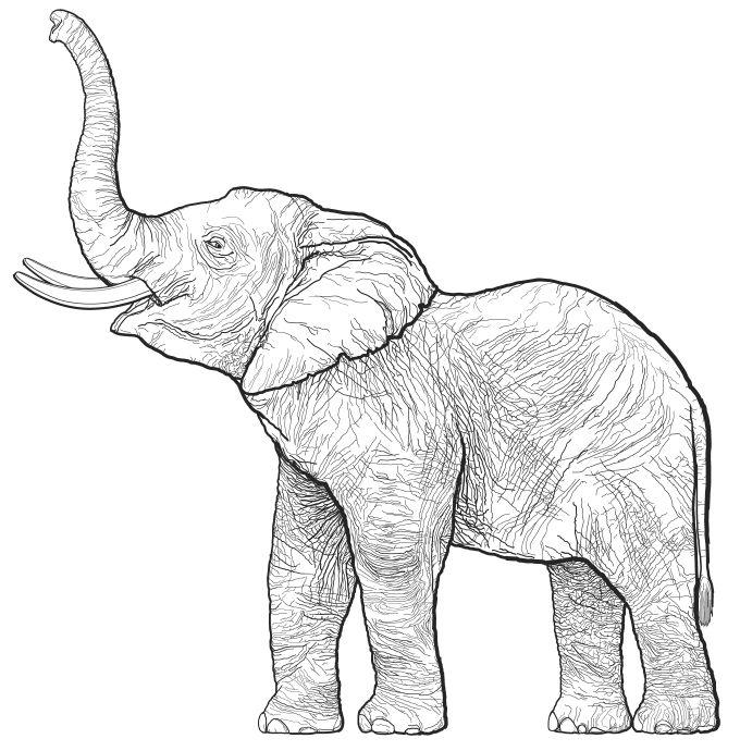 Drawn elephant / Dr Elephant Art Pinterest