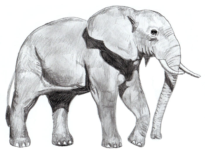 Drawn elephant To by Elephant Elephant How