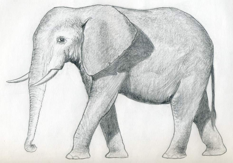 Drawn elephant Elephant To enlarge An the