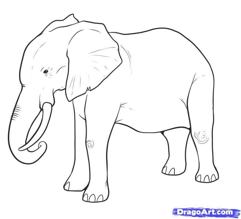 Drawn profile easy To Animals by Elephant Step