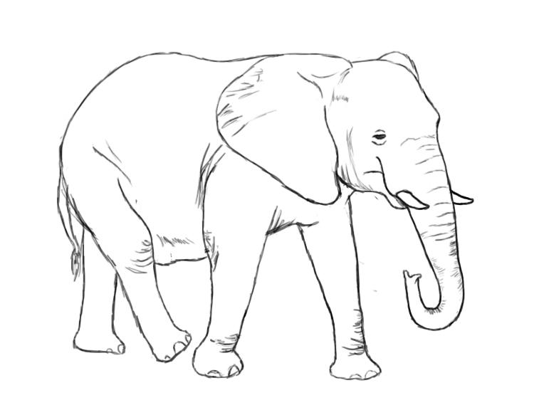 Drawn elephant Elephant To and Elephant An