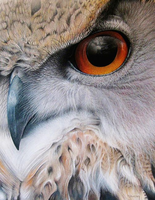 Drawn owl pastel Martin Pencil drawing Pinterest pictures