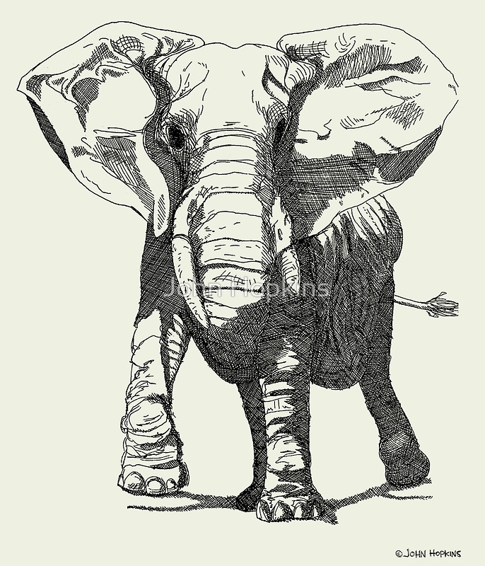 Drawn asian elephant John by Ink Elephant Drawing