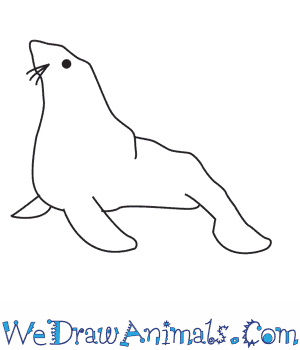 Drawn elephant seal Seal to How a Draw