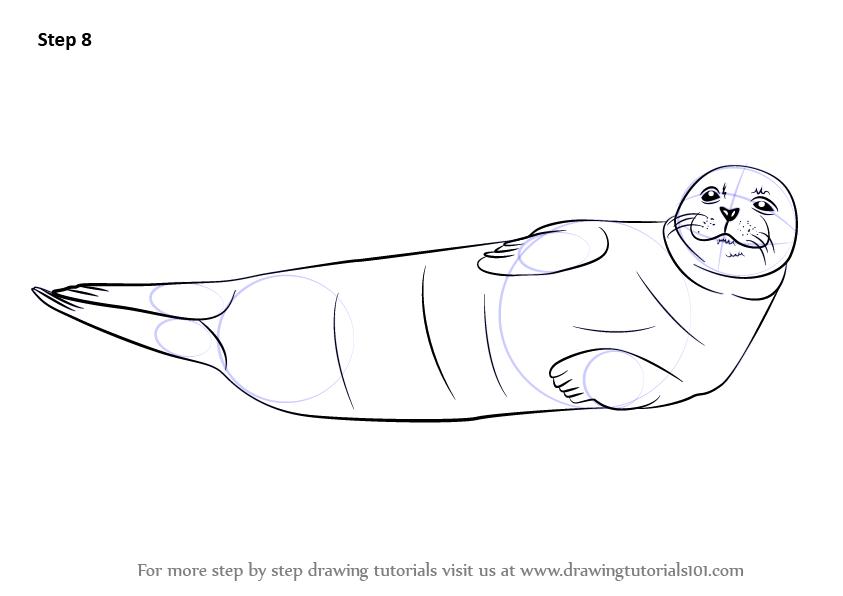 Drawn elephant seal To finish Harbor necessary make