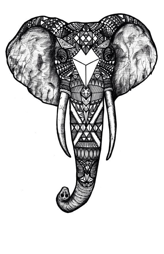 Drawn head indian elephant Indian  Elephant Elephant 25+
