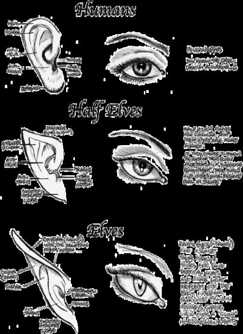 Drawn elf / Half Ears Drawing Ears