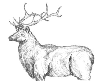 Drawn elk Elk Digital Elk drawing Download
